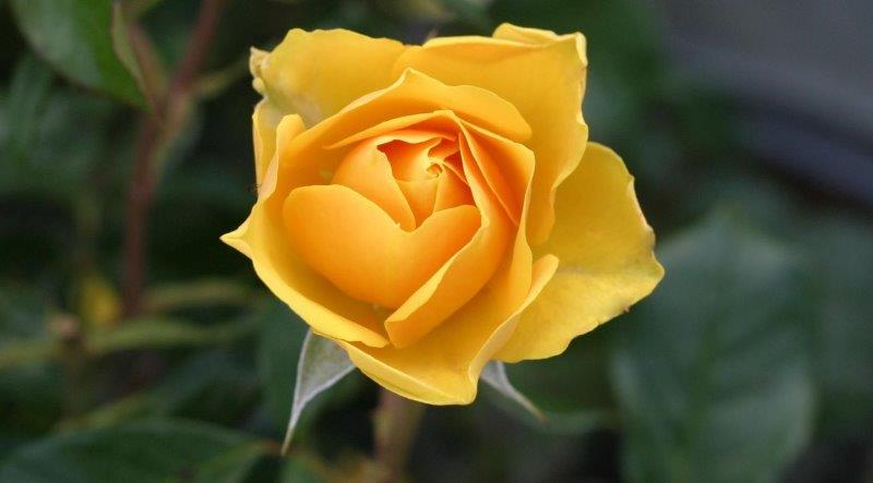 Death Notice, funeral, obituaries, NZ, New Zealand, condolences, tributes, memories, amemorytree, heavenaddress, NZ Herald, Stuff